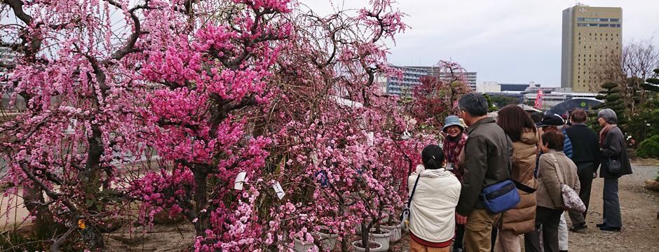 熊本 植木 市 2020
